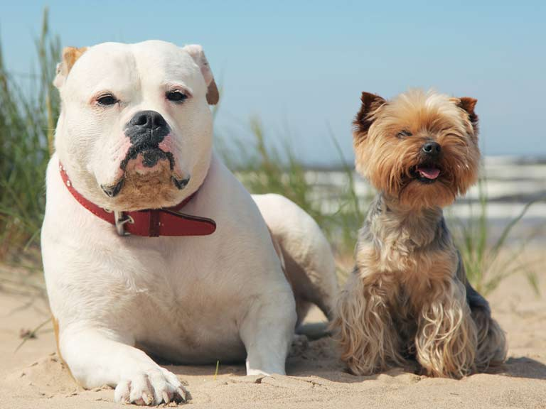 Two dogs chillin' on the beach