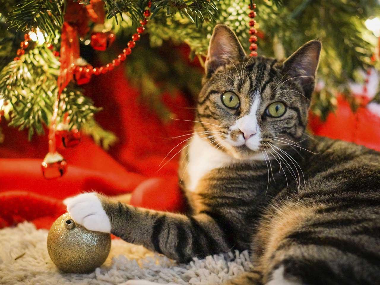 Give Your Pet A Happy Christmas Saga