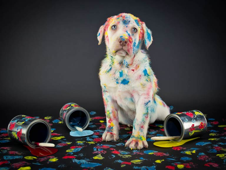 Puppy covered in paint