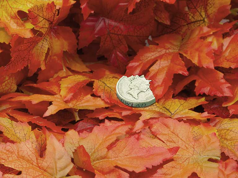 A pound coin on fallen leaves to represent the Autumn Statement