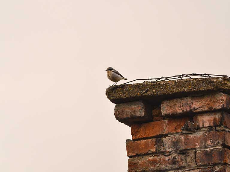 A bird perches on a chimney