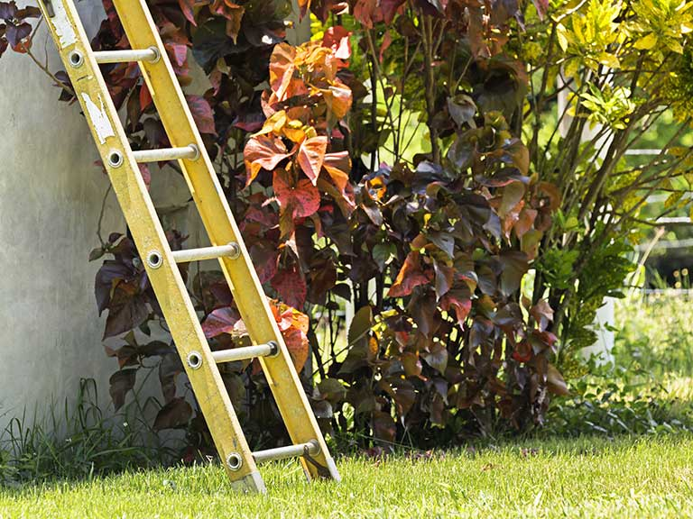 A ladder stands in a garden