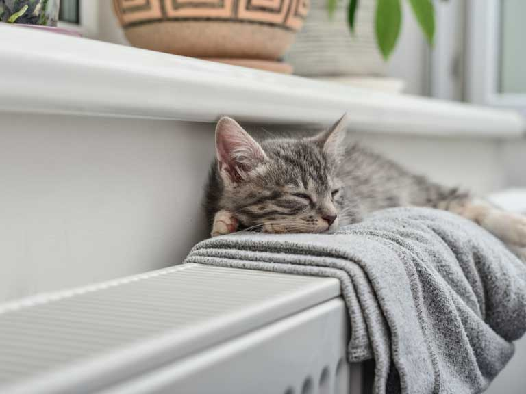 kitten snoozing on a blanket on a radiator