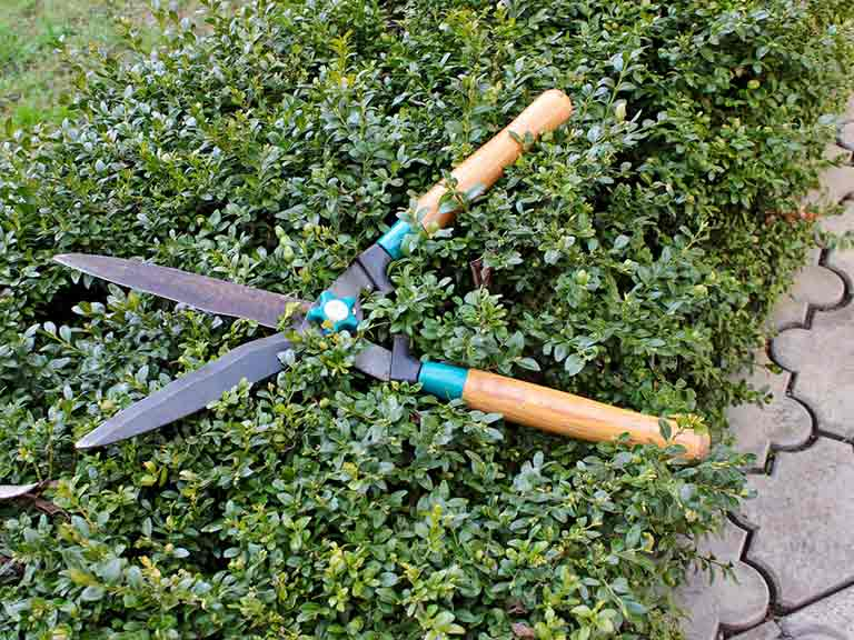 Hedge and garden tools