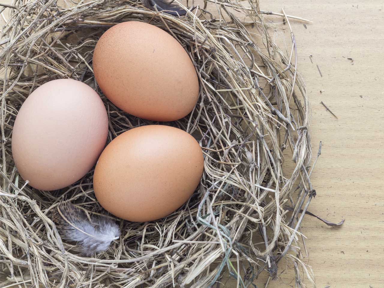 Eggs in a nest to represent a pension nest egg
