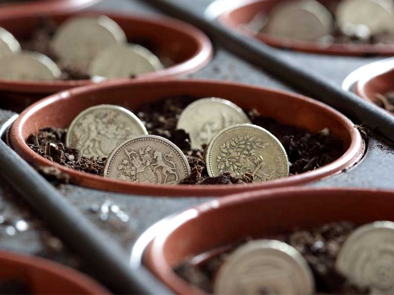 Pots with pound coins planted to represent investments and investing