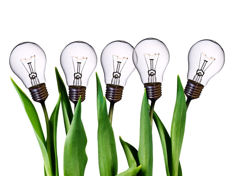 Light bulbs and plants to represent energy efficiency and environmental protection