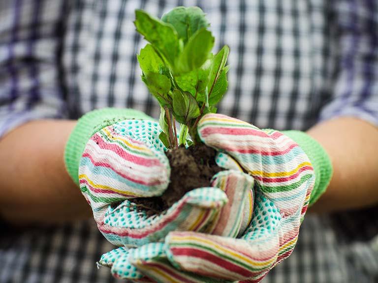 Tiffany daneff saga - Money saving tips in gardening ...