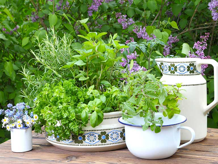 Herbs growing in pots in a garden.