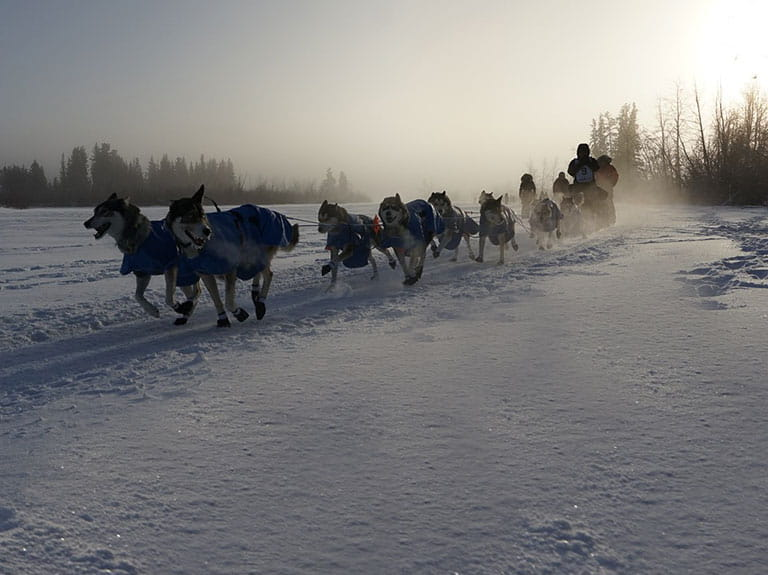 A sled being pulled by dogs over the snow in the Yukon, Canada