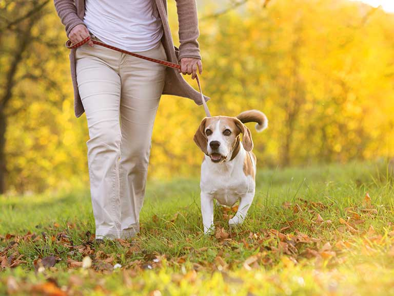 An older woman changes career to become a dog walker in later life