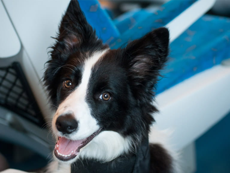 You can take up to two dogs per passenger on a train without charge, but they must be kept on a lead or in a carrier and must not take up a seat