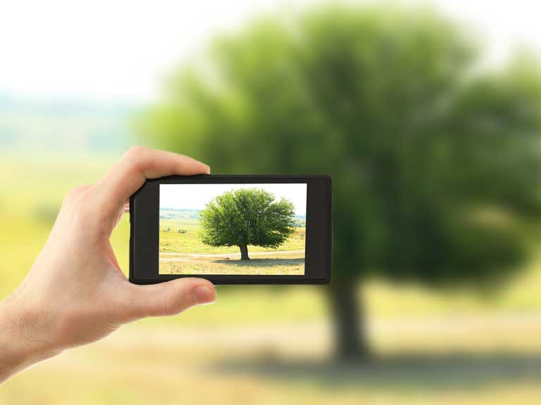 Taking a photo of a tree on an iPhone
