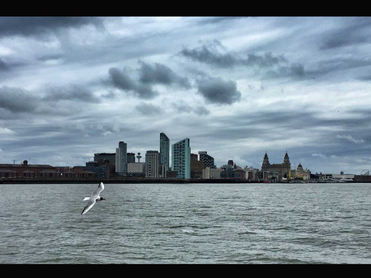 iPhone photo of a seagull flying over the River Mersey in Liverpool