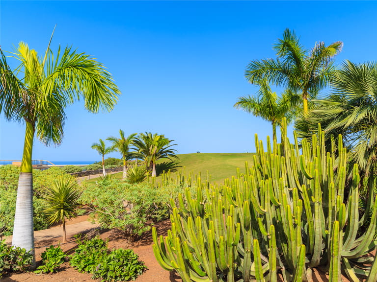 Palm trees and cacti plants on a golf course in nothern part of Tenerife island, Spain