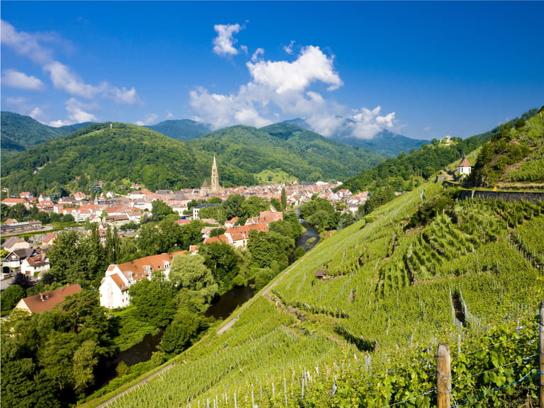 Grand cru vineyard in Alsace