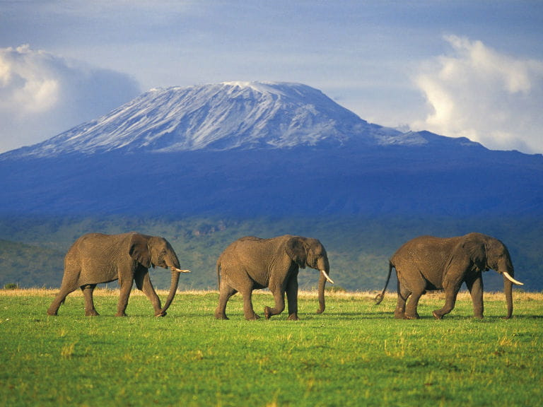 Three elephants in front of Mount Kilimanjaro