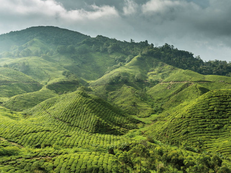 The foothills of the Cameron Highlands, Malaysia