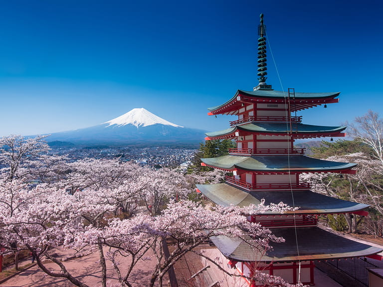 Famous Japanese cherry blossom surrounding a red pagoda with Mt Fuji on the background