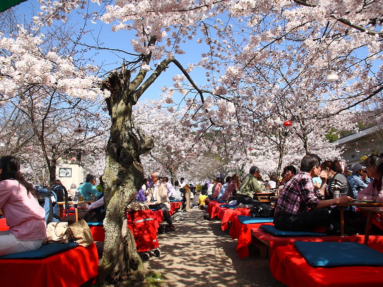 Japanese people gather on April 4th, 2010 in Maruyama Park in Kyoto, Japan to celebrate