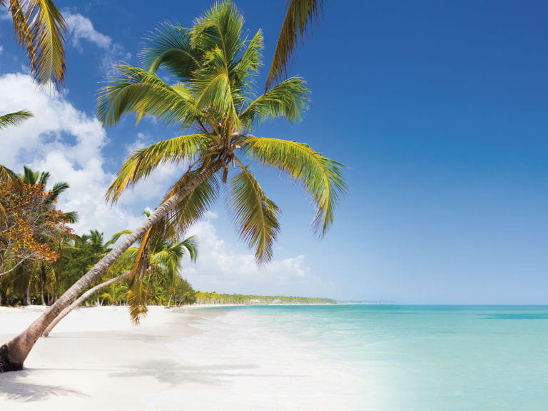 A coconut tree overhanging a beach in the Dominican Republic