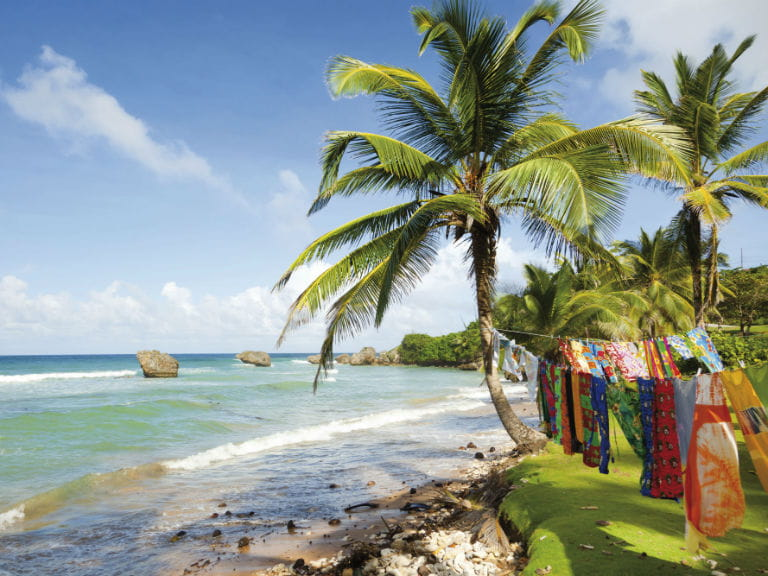 Coconut trees on Crane Beach, Barbados