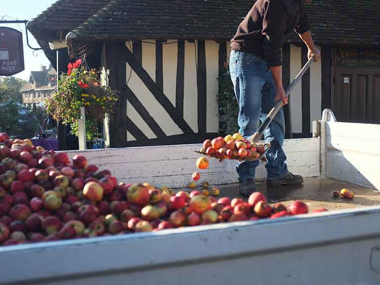 Apple harvest in Normandy, France © Thierry Rousseau