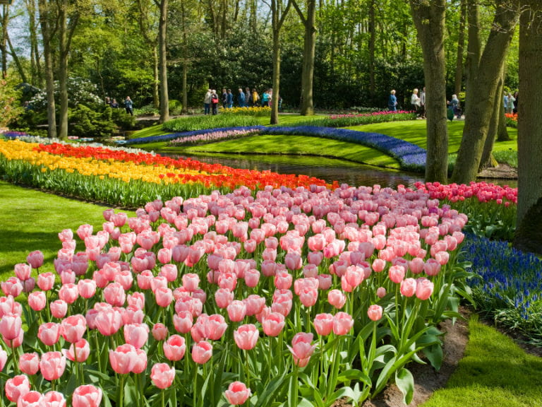 Keukenhof Tulip Gardens, the Netherlands