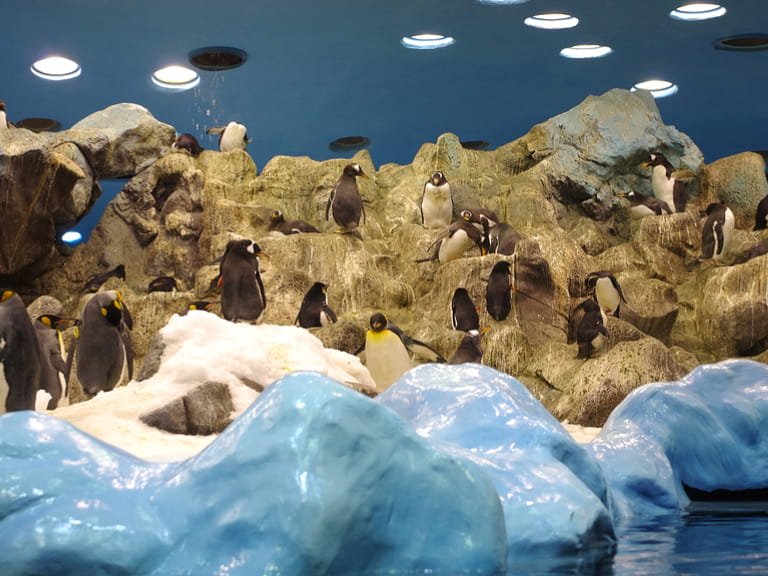 Penguins at the Loro Parque, Tenerife