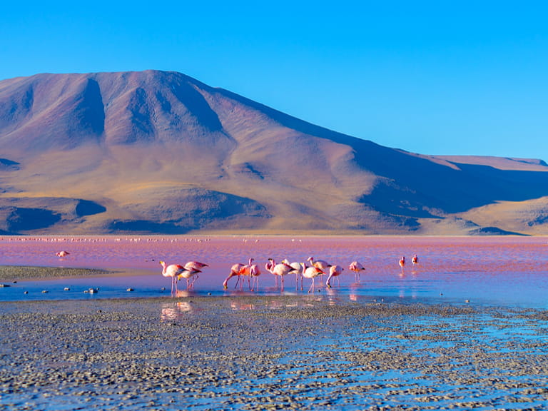 Group of pink flamingos in the colorful water of