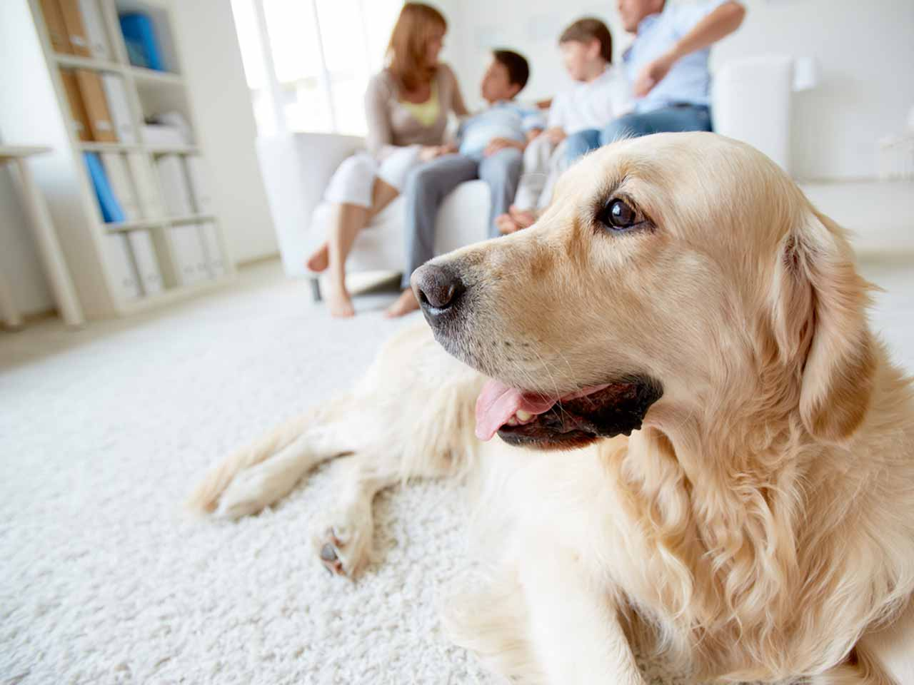 Enjoyable The Best Dog Friendly Cottages Saga Download Free Architecture Designs Embacsunscenecom