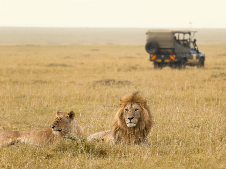 Two lions in Maasai Mara National Reserve, Kenya