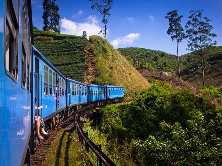 Train in Sri Lanka through tea plant