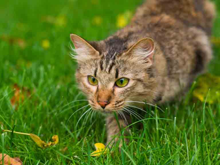How to keep cats out of the garden